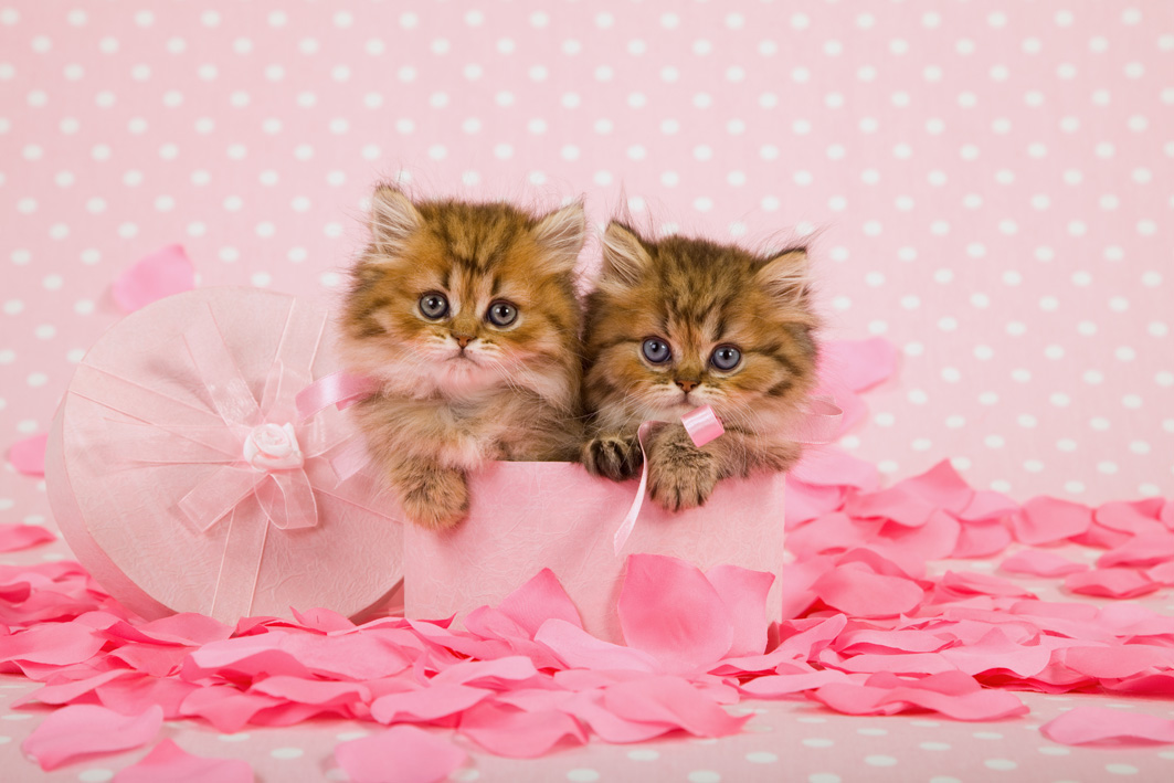 котята с рождения картинки первого числа
