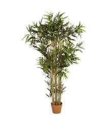 Bambuk ağacı