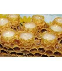 Arı südü