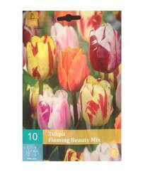 Tulipa Flamiing Beauty mix