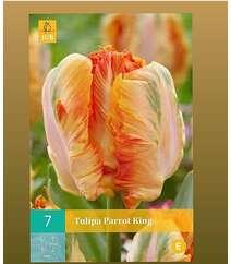 Tulipa Parrot King
