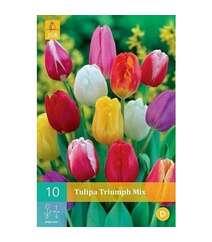 Tulipa Dubbel Vroeg Mix