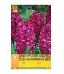 Hyacinthus Woodstock (Qiaçent)