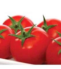 Zodiac F1 Pomidor toxumu